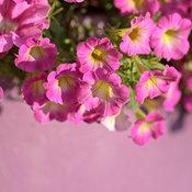 pollinator_patio_220.jpg