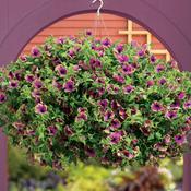 purple_door.jpg