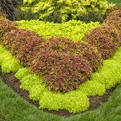 pvg_gardens_027.jpg