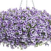 PW mono Supertunia® Violet Star Charm