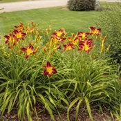 residential_gardens_138.jpg