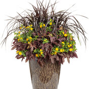 AquaPots® by Proven Winners® - Volcanic on Falling Brown Tall Round