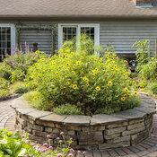 scene_proven_harvest_pollinator_garden_16.jpg