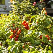 scene_proven_harvest_pollinator_garden_50.jpg