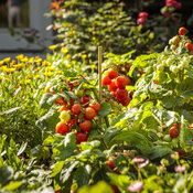 scene_proven_harvest_pollinator_garden_52.jpg