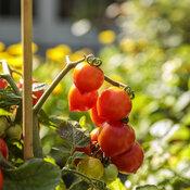 scene_proven_harvest_pollinator_garden_55.jpg