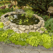sedum_and_pond_34.jpg