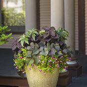 Shade Garden Patio Container