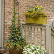 small_patio_c_2017_092.jpg