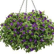 summerwave_large_violet.jpg