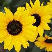 suncredibleyellow_0745.jpg