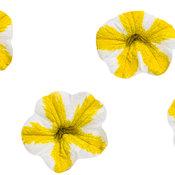 superbells_lemon_slice.jpg