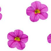 superbells_pink.jpg