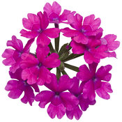 superbena_pink_shades_06.jpg
