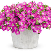 Supertunia® Mini Bright Pink mono