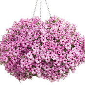 supertunia_pink_star_charm_hangingbasket.jpg