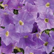 Supertunia® Blue Skies - Petunia hybrid