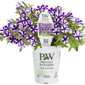 supertunia_violet_star_charm_branded_container.jpg