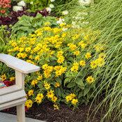 tracys_garden_103.jpg