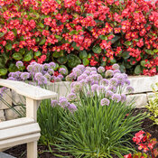 tracys_garden_112.jpg