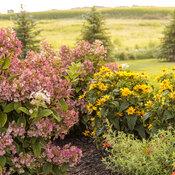 tracys_garden_129.jpg