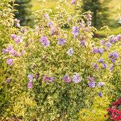 tracys_garden_157.jpg