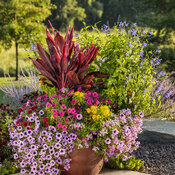 tracys_garden_173.jpg