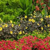 tropical_garden_068.jpg