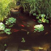 watergarden_6-305.jpg
