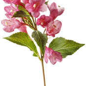 weigela_sonic_bloom_pink_04.jpg