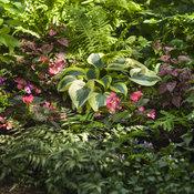westside_shade_garden_2017_078.jpg