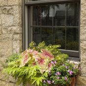 window_box_on_limestone_home_39.jpg