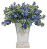 Blue My Mind® - Dwarf Morning Glory - Evolvulus hybrid