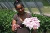 Let's Dance® Diva! - Reblooming Hydrangea - Hydrangea macrophylla