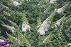 Pugster White® - Butterfly Bush - Buddleia x
