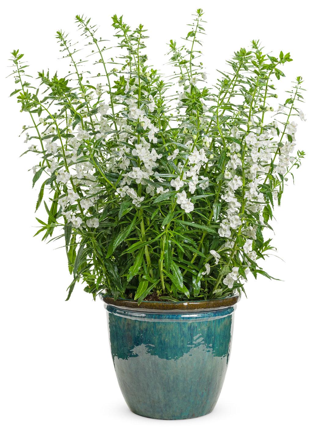Plants In The Shade Garden Ideas