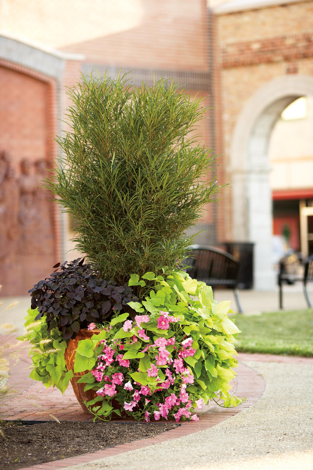 Image Result For Ideas For Large Planters