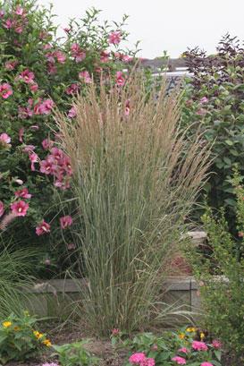 Shade Flower Garden Ideas