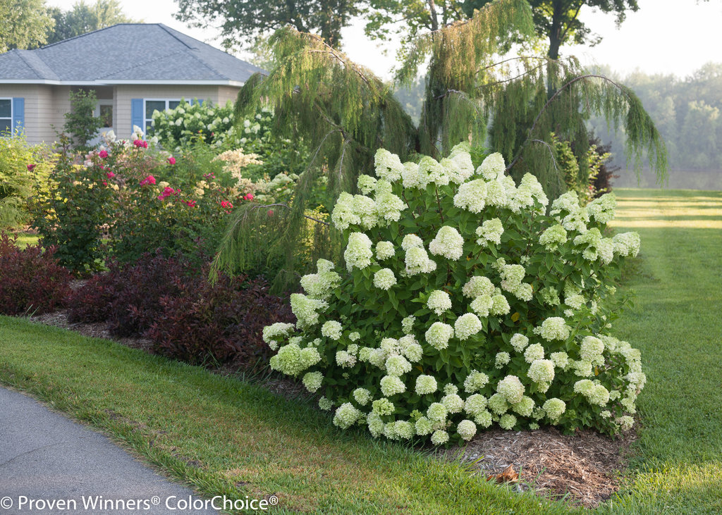 incrediball-hydrangea-companion-plants