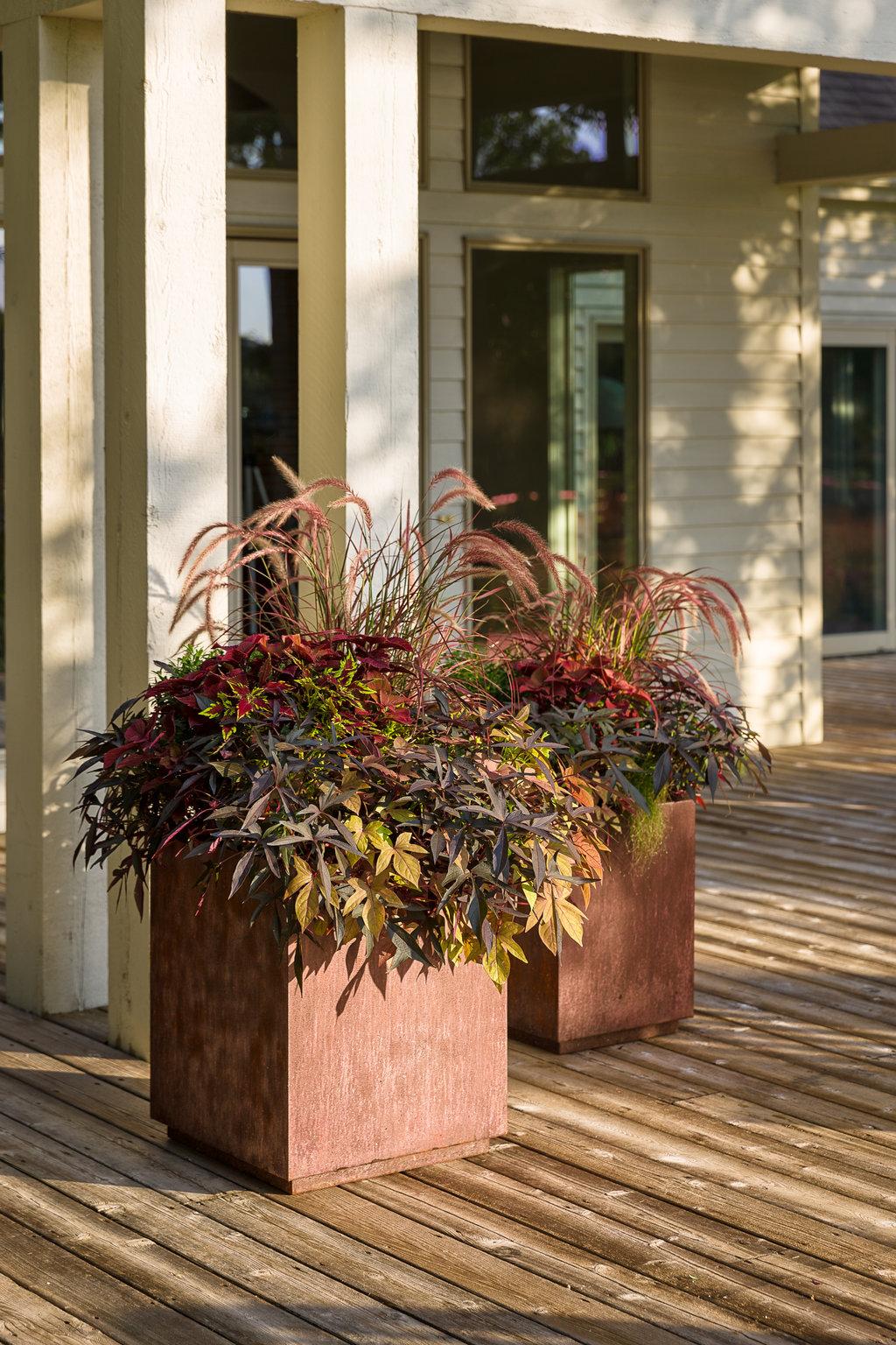 Shade Garden Ideas Perennials