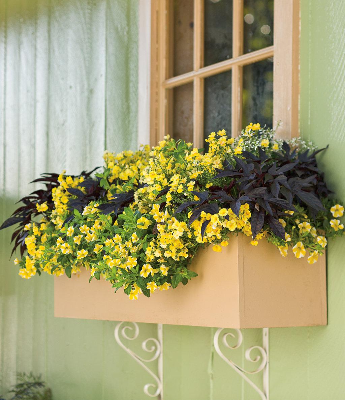 скобе фото желтые ампельные цветы владимирович