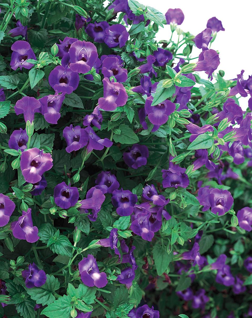 Энциклопедия садовых цветов с фото и названием