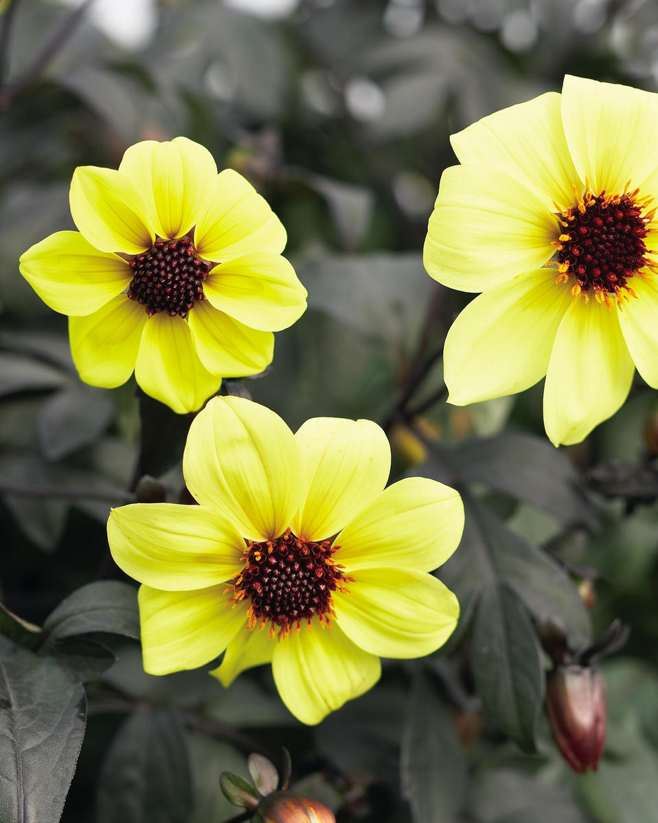spring garden black dating site 10 sunshine yellow shrubs to brighten up your garden landscaping 12 things in your yard to throw out right now 7 essential spring decor updates for your home.