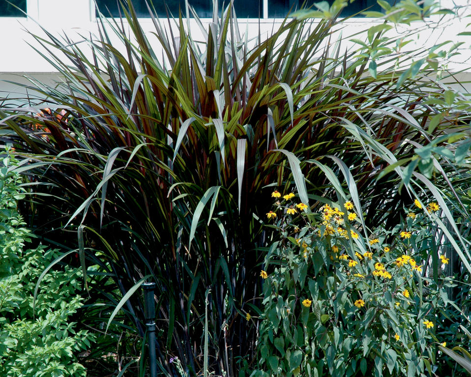 301 moved permanently for Fountain grass for shade
