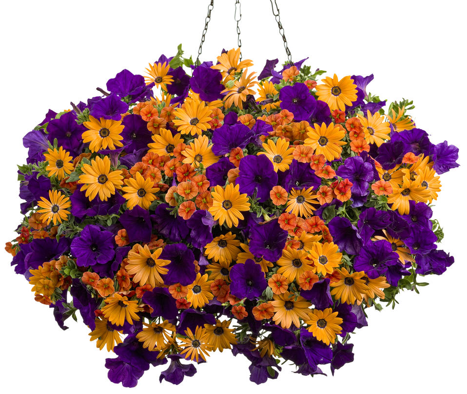 Best Flower Combinations For Hanging Baskets : Vintage art proven winners