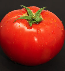 'Garden Treasure' - Tomato - Lycopersicon esculentum
