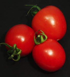 Tempting Tomatoes® 'Garden Gem' - Lycopersicon esculentum