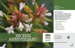 Bronze Anniversary Abelia Benchcard
