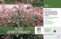 Ruby Anniversary Abelia Benchcard