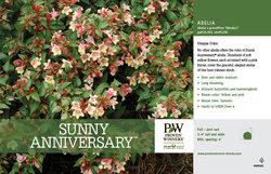 Sunny Anniversary Abelia benchcard